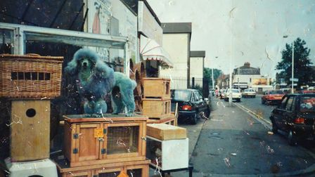 Molly the poodle outisde the store in 1995. Doreen used to colour Molly with Crazy Colour.