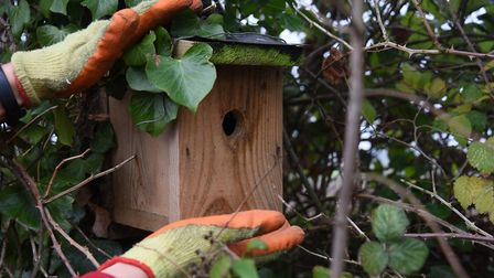 The farm encourages wild birds to nest by installing bird boxes around the Christmas trees. As part
