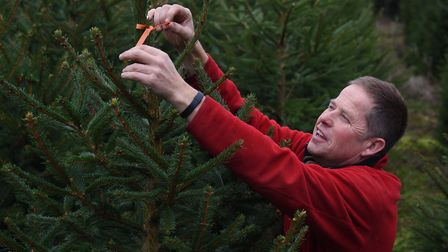 The farm is also trialling a project where ribbon is tied on the trees, which was been shown to attr