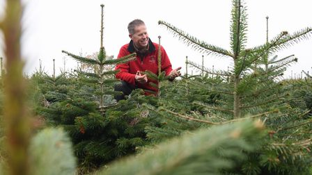 Trevor Oram checks the growth of his seven-year-old Nordman Fir Christmas trees at his farm in Wrent