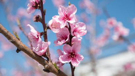 Spring is in the air, but is there a spring in the step of the market?