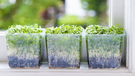 Windowsill growing is a great way to inject a little green into your interiors