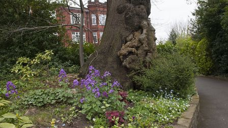 Garden of Southwood Hall,Wood Lane Highgate