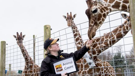 Africa Alive! lead qualified keeper Zoe Nunn at the giraffe enclosure during the park's annual anima