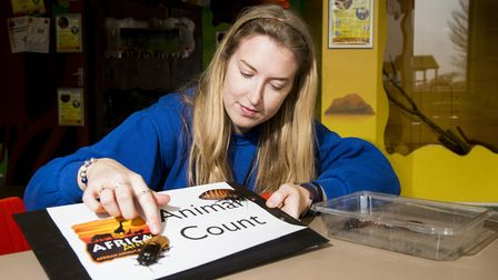Africa Alive! education officer Alice Batts counts the Madagascan Hissing Cockroaches during the par