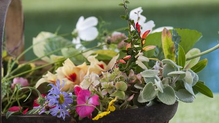 A floral preview from Hampstead Horticultural Society. Photo: Nigel Sutton