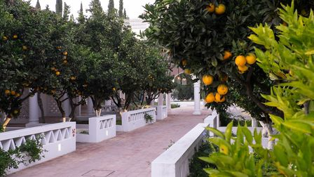 The orange tree lined path to the breakfast room at Vilamonte