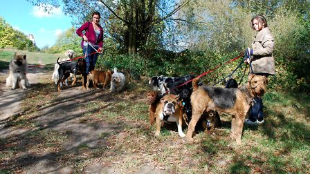 Dog walkers on Hampstead Heath. Picture: Polly Hancock