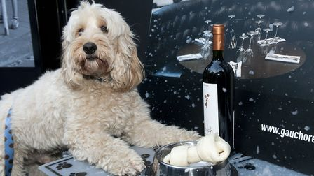 Dogs dinner party at Gaucho Hampstead in aid of Hounds for Heroes. Picture: Nigel Sutton