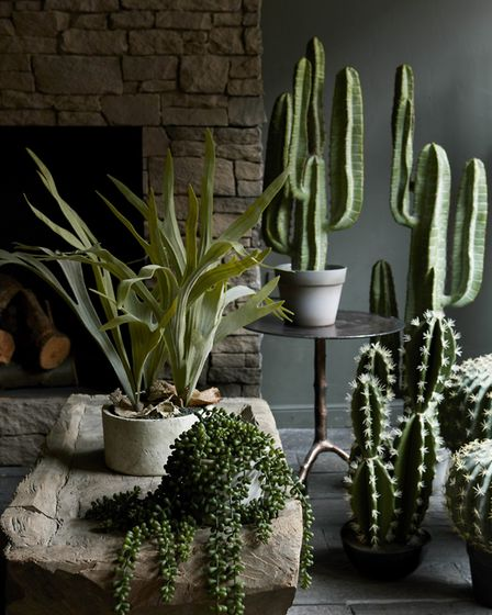 The staghorn Plant, £70; Small Yuha Cactus, £85; String of Pearls Succulent, currently reduced to £3