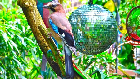 Birds and glitterballs in Bill Oddie's garden