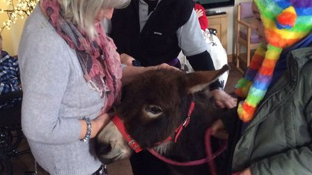Donkeys visiting the residents at Harleston House care home on Saturday 9th December 2017. Photo: Ha