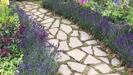 Lavender is said to balance the senses for a calming effect, and doesn't need too much care and atte