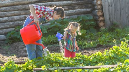 With National Allotments Week on the way, the National Allotment Society offers advice on how to get