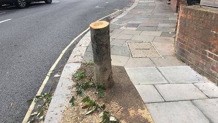 This tree was reportedly cut on the morning of September 13 with no consultation Picture: Nathan Lou