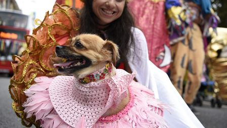 A dog dressed up at Hackney Carnival. Picture: Hackney Council