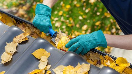A gutter clogged with winter leaves