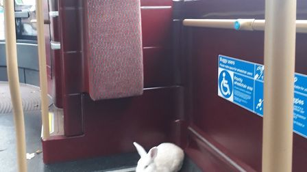 The rabbit was spotted on the 254 to the Nag's Head in Holloway. Picture: Matt Hepburn