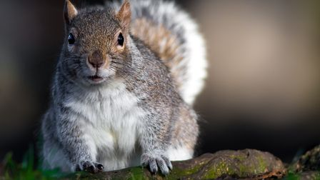 This superb shot of a curious squirrel striking a pose has been crowned The Journal's Picture of the