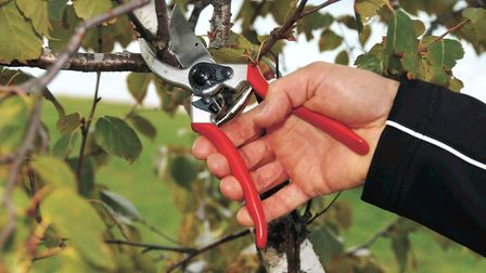 You can't go wrong with a pair of secateurs