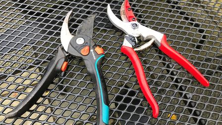 All tools should be wiped with a damp cloth and washing-up liquid to remove any sap