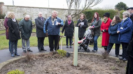 Lowestoft Town Mayor Ian Graham plants a Sessile Oak Tree at Sparrows Nest to celebrate the 800th an