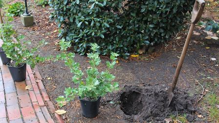 Gooseberries can be planted all year long, but autumn is the ideal time