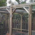 The catio has been deemed an extension and will have to be torn down.