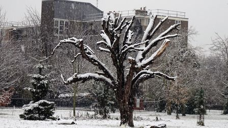 Snow in Clissold Park on Sunday. Picture: David Holt/Flickr/Creative Commons licence CC BY 2.0