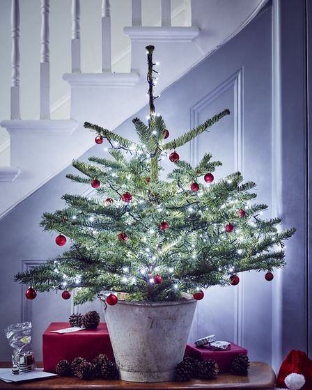Many garden centres also sell artificial thin trees which are almost like a standard, just with bran