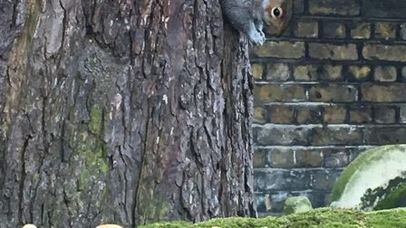 """One of the """"wonderful"""" squirrels in the church yard, next to the monkey nuts Johnny was feeding them"""