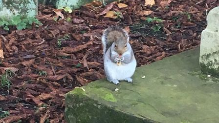 """One of the """"wonderful"""" squirrels in the church yard. Picture: Christine Butler"""