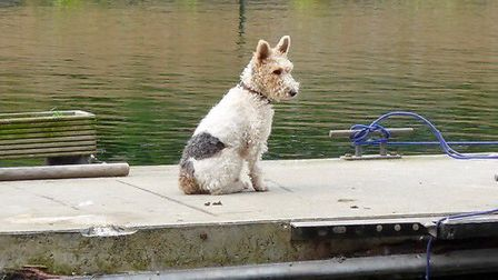 Rosie next to the canal, where her owner lives. Picture: Marnie Collins