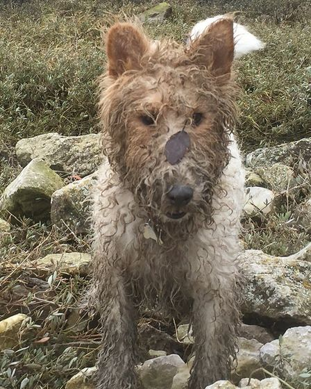 Rosie covered in mud - as she may well be now after being on the run for 21 days. Picture: Marnie Co
