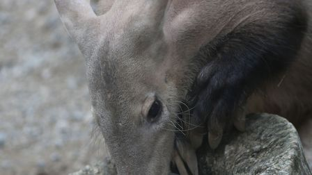 A spokesman for the zoo confirmed the death of Misha the aardvark. Four meerkats who are unaccounte