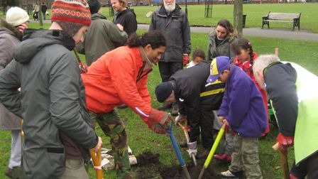 Planting a stone pine on Hackney Downs 2011. Picture: Tree Musketeers