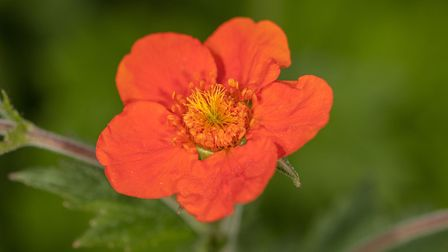 A pot of a geum