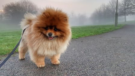 A cancer charity is looking for pet owners to take part in its first sponsored dog walk. Picture: CL