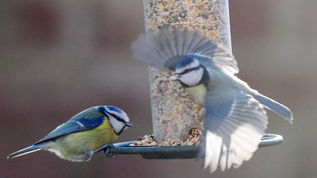 Help experts count our wildlife. Picture: PA WIRE