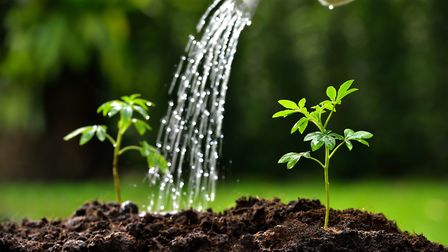 Organisations including the National Trust, the RHS and Waterwise have long been promoting water-sav