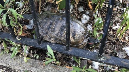 The terrapins have been spotted in Clissold Park. Picture: Lincoln Dexter