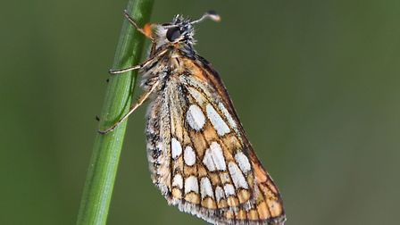 A chequered skipper butterfly. Picture: PA