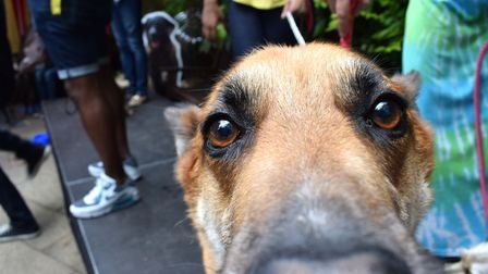 An inquisitive canine at the Pup Idol event. Picture: Polly Hancock