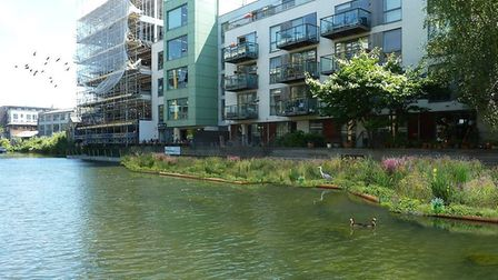 """The """"living waterway"""" plant beds in the Kingsland Basin. Picture: Gideon Corby"""
