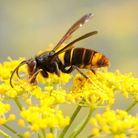 Wasps are of great benefit to the garden (PA)
