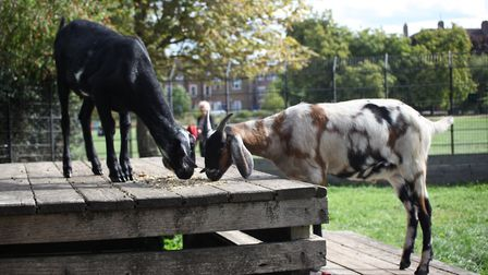 Wallace and Gromit enjoy some food together. Picture: Hackney Council