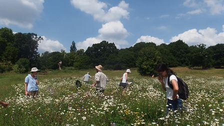A bee hunt led by Heath Hands volunteers. Picture: Joanne Maddox