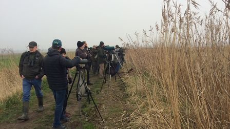 Some of the twitchers search for the elusive American bittern at Carlton Marshes. Picture: JOHN GRAN