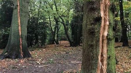 Lightning caused huge problems for two mature oaks in Highgate Wood. Picture: City of London Corpora