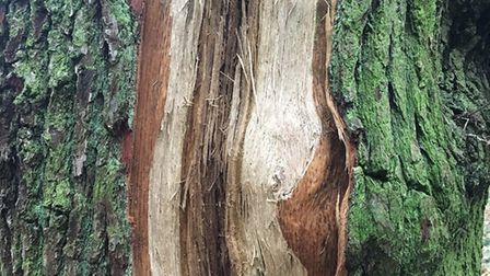 The lightning ripped through the trees, from crown to root. Picture: Colin Houston / Heath Hands